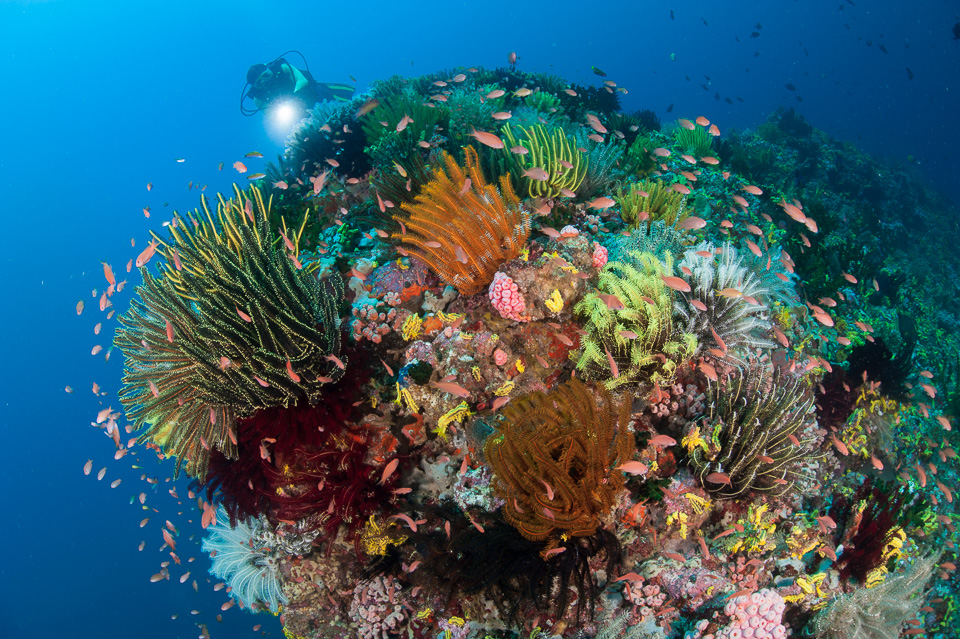 Steve jones underwater photography by steve jones uk based steve jones underwater photography by steve jones uk based underwater photographer and journalist with an affinity for challenging environments publicscrutiny Image collections